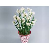 Paperwhites & Decorative Tin